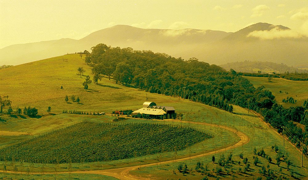 100-Things-To-Do-Before-You-Die-#087-Follow-The-Yarra-Valley-Grape-Trail