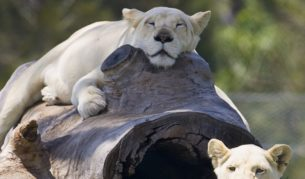 Privately-owned Mogo Zoo with endangered and exotic species