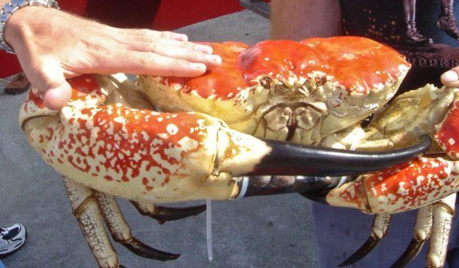 strahan crab -- rob gordon