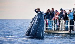 100 Things To Do Before You Die #38 Whale Watch In Hervey Bay Featured Image