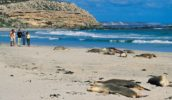 100 Things To Do Before You Die #45 Kangaroo Island Featured Image