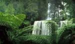 050 Russell Falls, TAS