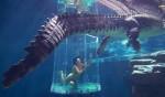 Featured Image Crocasaurus Cove