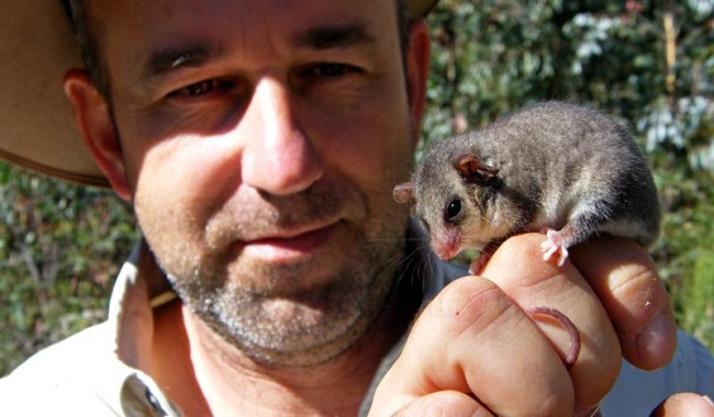 Mark Jekabsons with an eastern pygmy possum, a rarely sighted nocturnal marsupial. Image by Mark Jekabson