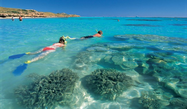 Snorkelling just off shore on the fringe of Ningaloo Reef. Image by Western Xposure