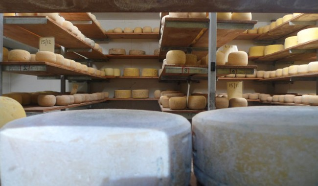 The ageing room at Bruny Island Cheese Co