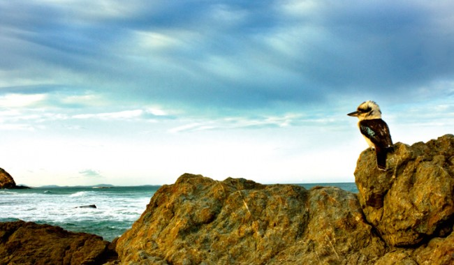 Winning Image - King of the Coast