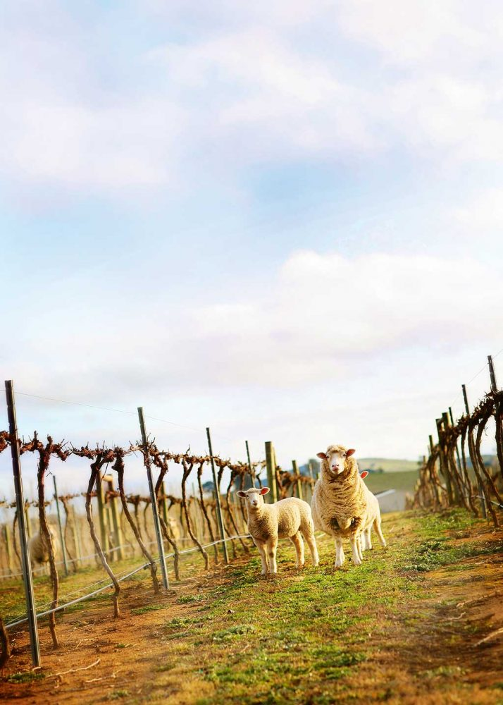Jeir-Creek-Winery,-Murrumbateman