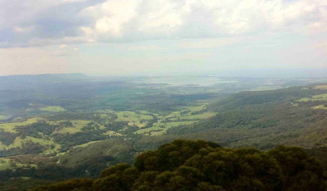 Illawarra Fly Treetop Adventure