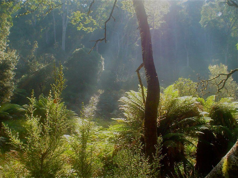 mountain-valley-wilderness-gallery-1