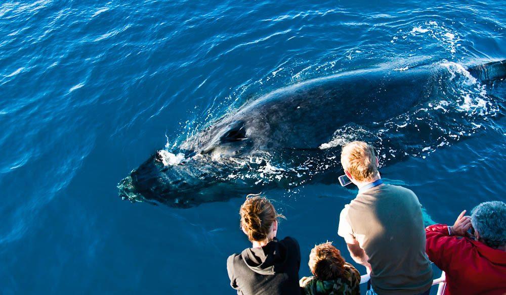 Hervey Bay whale watching