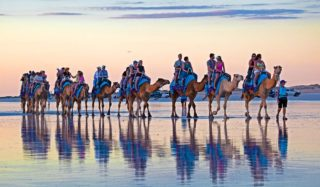 Camel reflections, Cable Beach