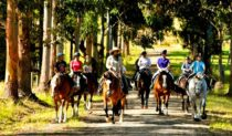 Margaret River by horseback