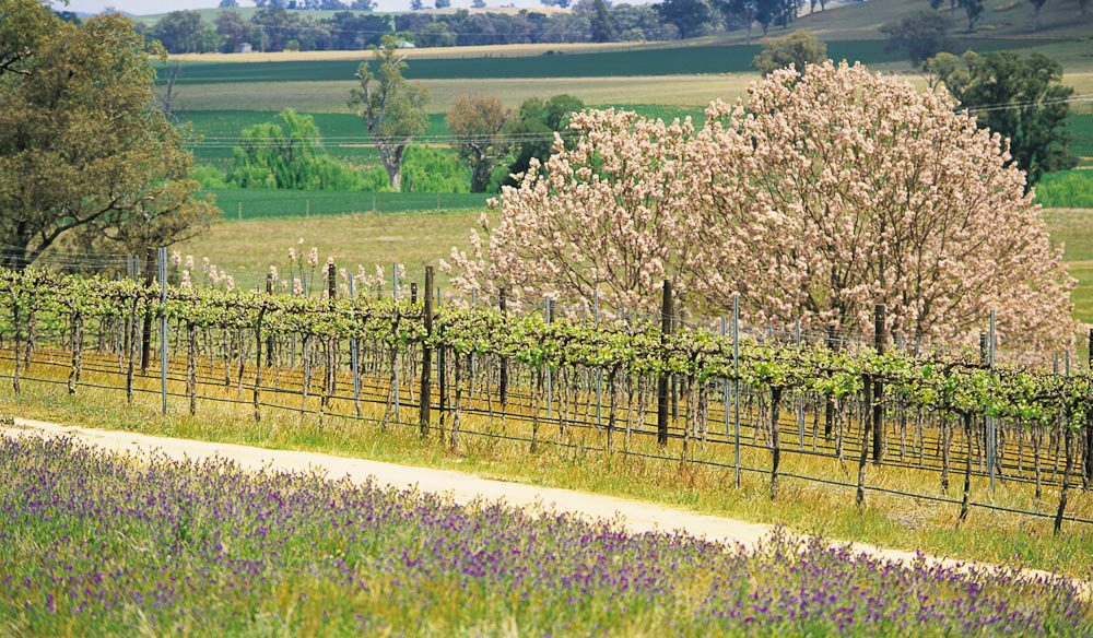 Orange is known as the food bowl of NSW and it has an equally impressive wine scene, too.