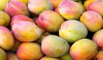 How can we eat the mango? Let us count the ways...