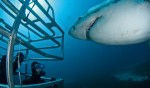 Face to face with a great white shark, well, almost.