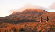 The Flinders Ranges centrepiece: Wilpena Pound (photo: Adam Bruzzone).