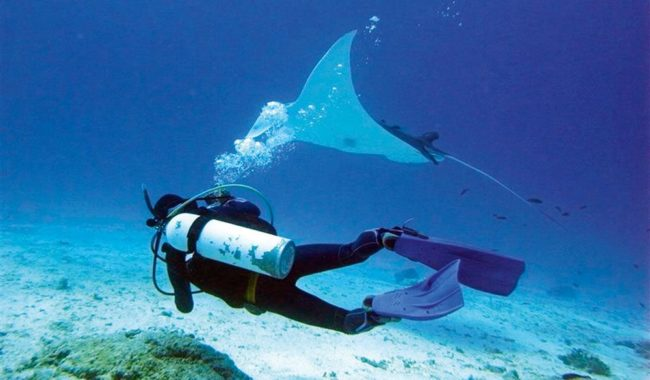 Lady Elliot Island is the only place on earth where you can swim with the giant manta rays like this.