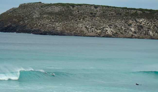 Doplhin surfing at Pennington Bay Kangaroo Island