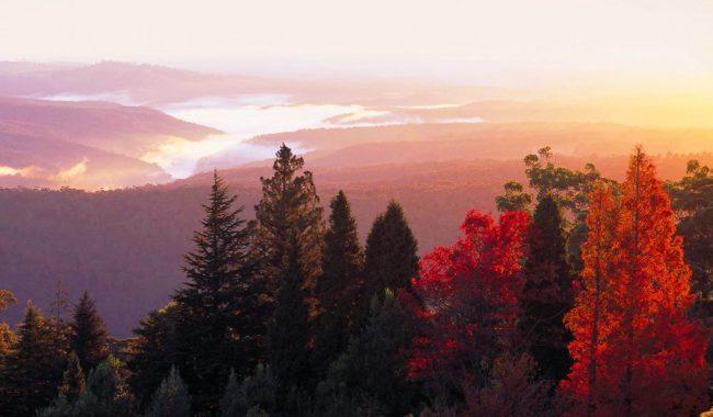 Blue Mountains Botanic Garden sits on the summit of Mount Tomah