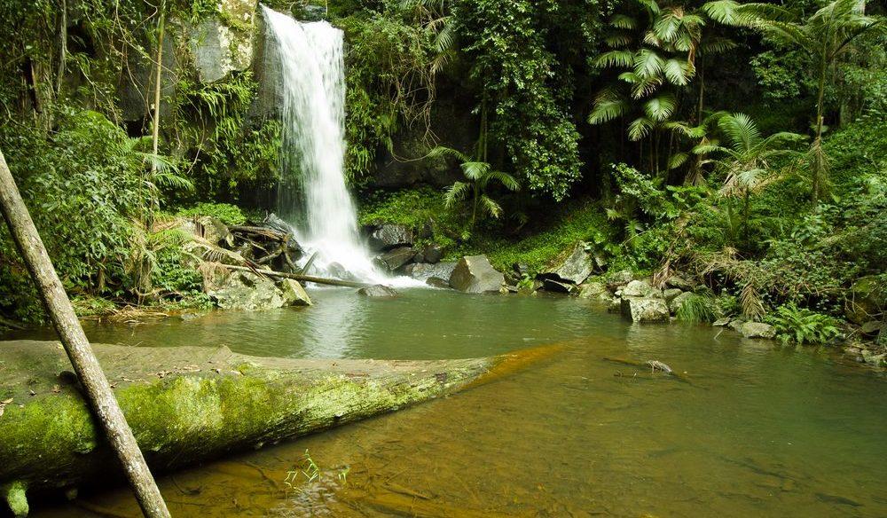Great for a rainforest mini break, Mount Tamborine, Queensland