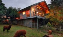 Wild Lime Cooking School offers its students accommodation in a Treehouse cottage