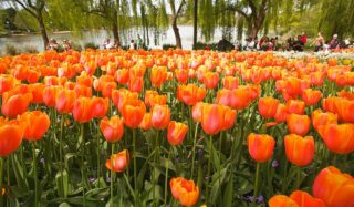 More than one million plants will make up Floriade 2014