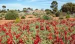 Australian Arid Lands Botanic Gardens, Port Augusta