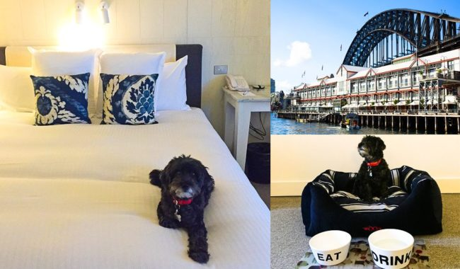 Pier One Sydney Harbour hotel dog review