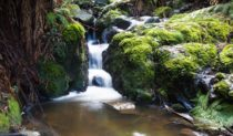 Dandenong Ranges is weekender nirvana for Melburnians