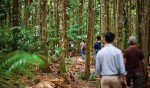 Daintree Rainforest guided walk