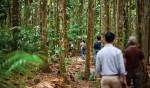 Daintree Rainforest guided walk