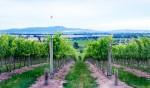 stay at Balgownie Estate Vineyard Resort