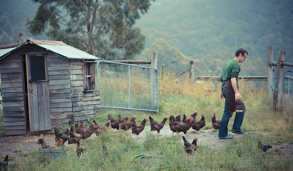 Agrarian Kitchen cooking school chickens