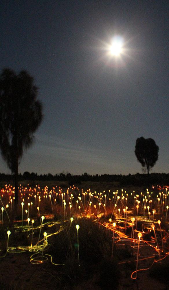 longitude 131 uluru accommodation stays glamping field of light