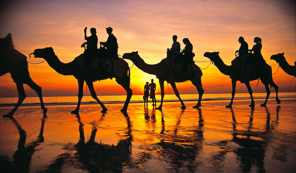 Camels on Cable Beach at sunset.
