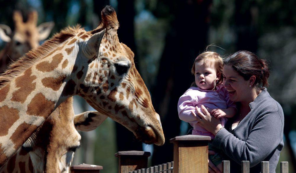 100-Things-To-Do-Before-You-Die-#062-Taronga-Zoo