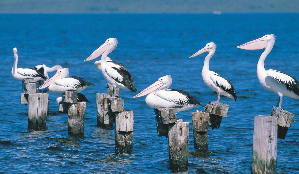 Walpole Inlet, WA (Western Australian Tourist Comm).