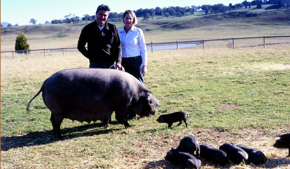 Pasquale Mutari and Cindy Bowman with potbelly pigs - beware, they bite, the pigs that is.