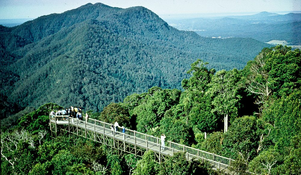 Skywalking and bird watching on Muttonbird Island and in Dorrigo National Park
