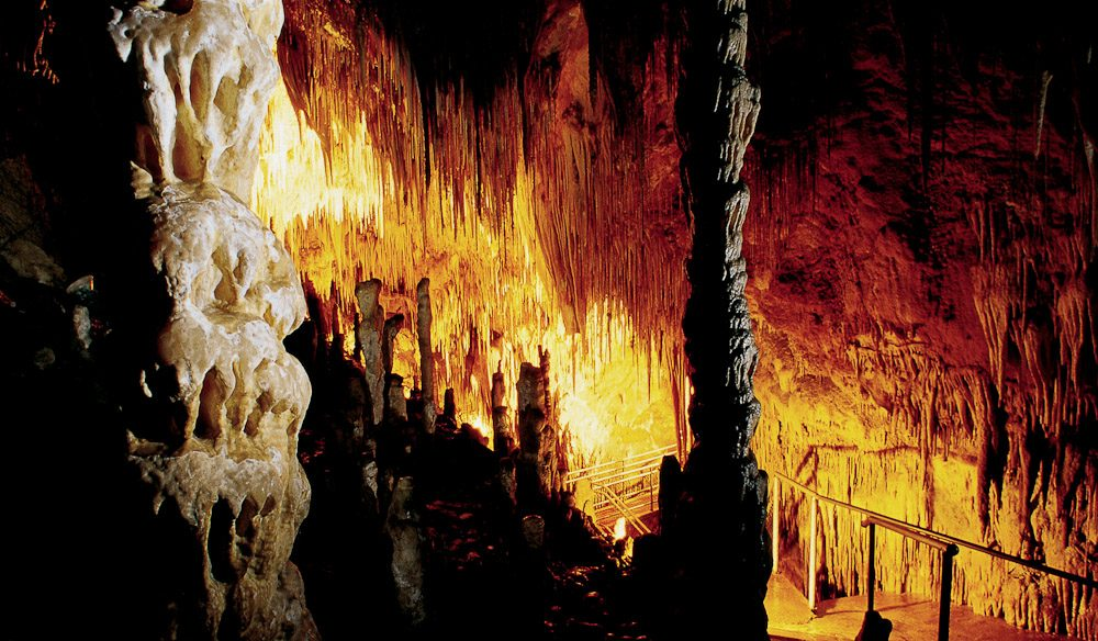 Visit the Hasting Caves thought to be 40 million years of age.