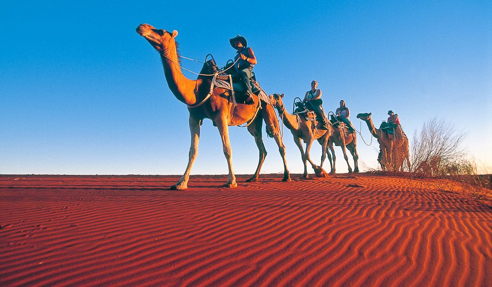 Anangu Waai's Flying Camel Tours take you through the Outback in ecclectic style. Image by Tourism NT