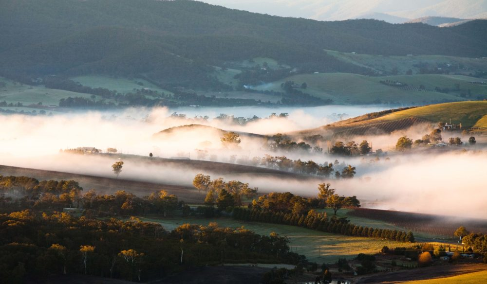 Yarra Valley Fog