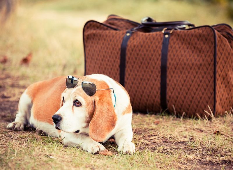 Dog gone it, I should have listened to Australian Traveller's advice on pet travel!