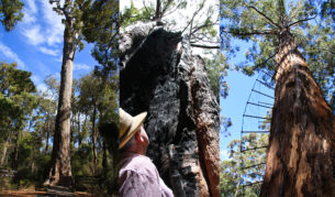 The author's dad inspects a giant fire-damaged Tingle.
