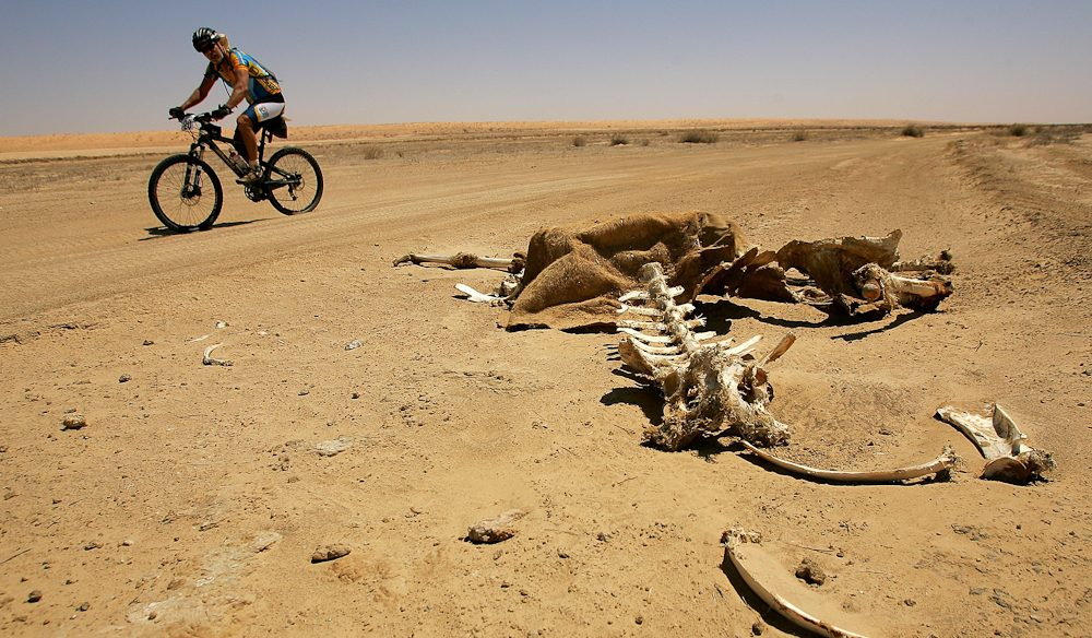 Bruce Wood rides past a camel carcass on the side of the road during day three of the Simpson Desert Bike Challenge race.