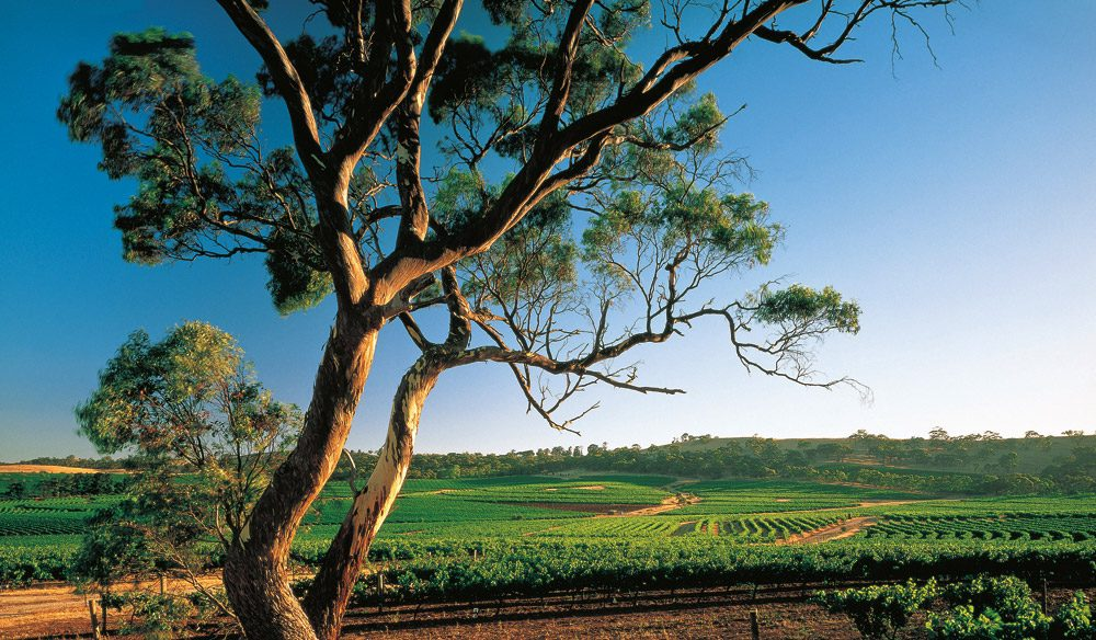 Vineyards of the Clare Valley.