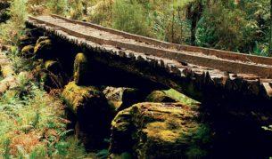 An old logging bridge.