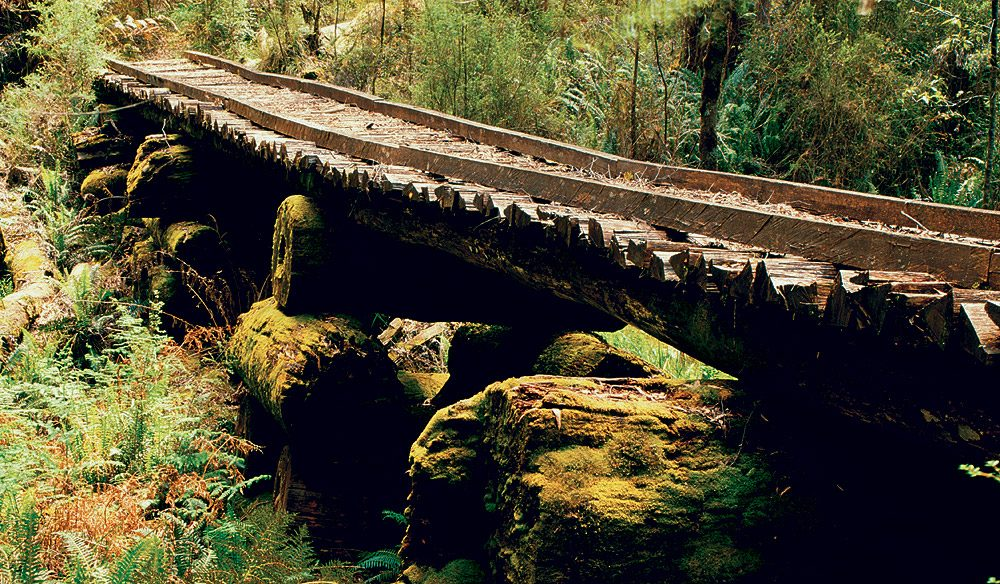 An old logging bridge.