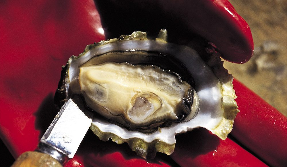 Coffin Bay Oysters. Considered by many to be the world's best.